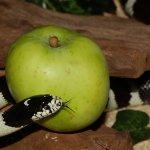 Sen Adam i Ewa znaczenie sennik