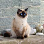 Sen o kotach- znaczenie i interpretacja.