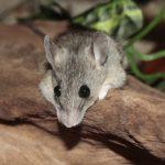 Co oznacza sen o myszach?