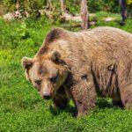 Co oznacza niedźwiedź we śnie?