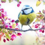 Ptak znaczenie snu