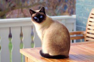 Kot we śnie- co oznacza. Interpretacja snu o kocie.