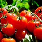 Sennik pomidory, kupować, sprzedawać oraz przyrządzać znaczenie