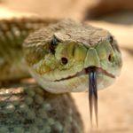 Sen o wężu znaczenie.